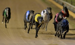 BENDIGO MEETING TRANSFERRED – 10 FEBRUARY 2017