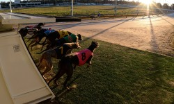 Victoria's finest greyhounds flock to Bendigo for Cup