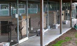 Bendigo Adoption Day postponed due to kennel cough at GAP Seymour