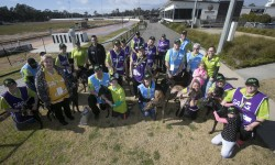 Bendigo Adoption Day finds new homes for 20 greyhounds