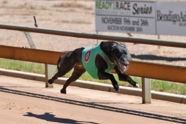 Nominations now open for Ready 2 Race Greyhound Sales