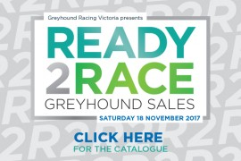 Check out the 2017 Ready 2 Race catalogue