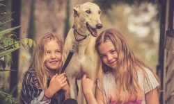 GAP Adoption Day – Bendigo