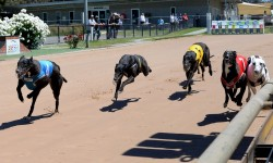 Ready 2 Race Sales: Another big day out at Bendigo