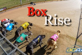 """Box Rise"" – Episode 2 – BGRA's greyhound racing show"